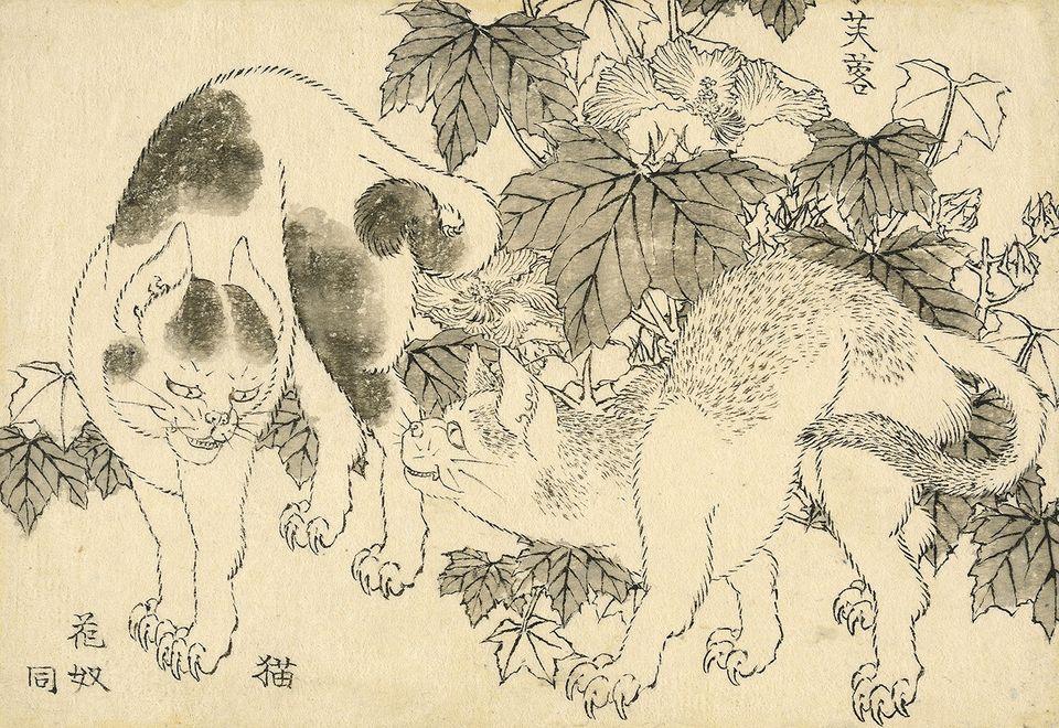 Katsushika Hokusai (1829), Cats and hibiscus: um impasse entre dois gatos, com hibiscus (fuyō) atrás