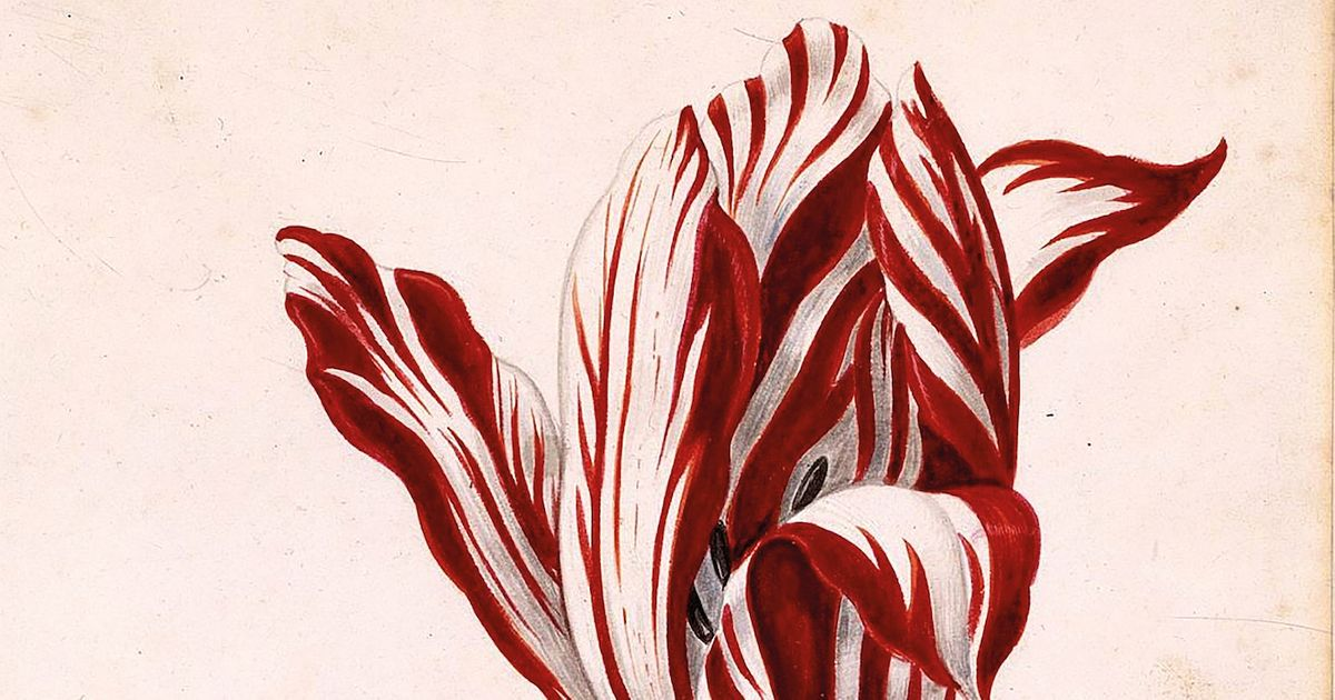 The cost of a single tulip bulb surged to the same price as a mansion 400 years ago: are NFTs the 'tulipmania' of the 21st century?